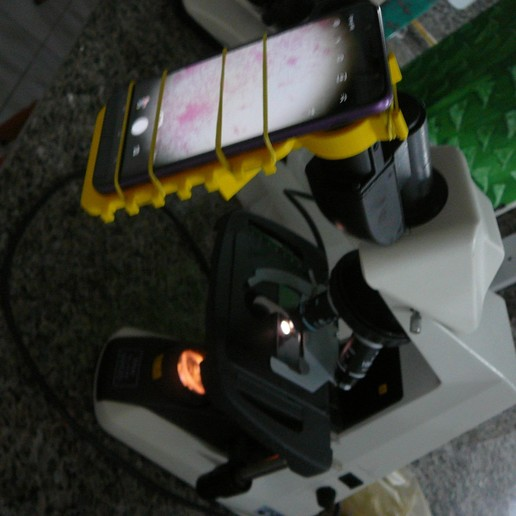 P1080943.JPG Download free STL file Microscope cell support - Suporte de celular para microscópio • 3D printer template, fabiomingori