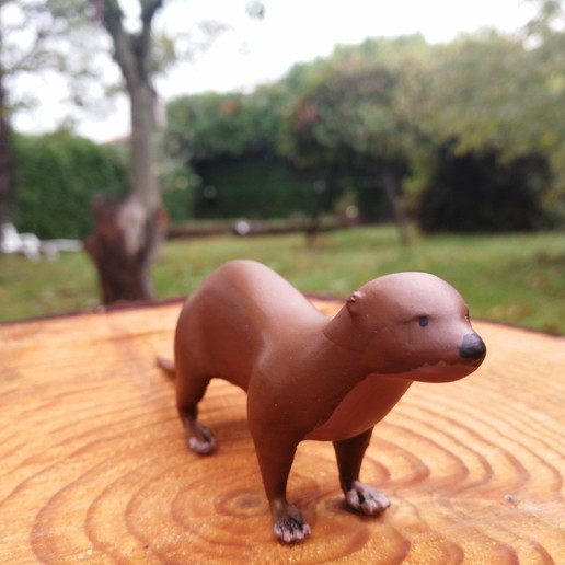 IMG_20191101_140206.jpg Download free STL file European Otter • Design to 3D print, Rascof