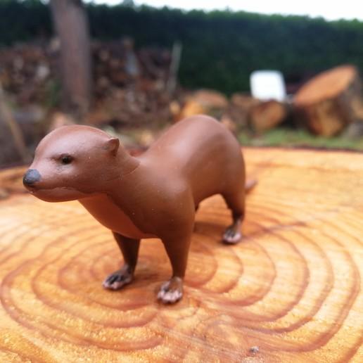 IMG_20191101_140156.jpg Download free STL file European Otter • Design to 3D print, Rascof