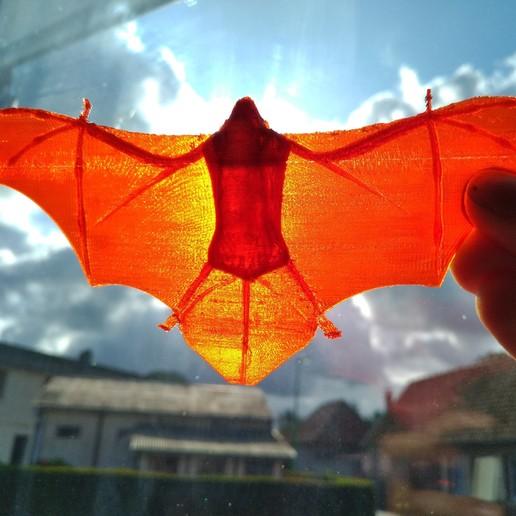 IMG_20190907_102503.jpg Télécharger fichier STL gratuit Pipistrelle • Objet pour imprimante 3D, Jiveur