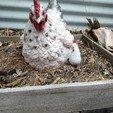 Descargar Modelos 3D para imprimir gratis Chickaletta de Paw Patrol, DFB93