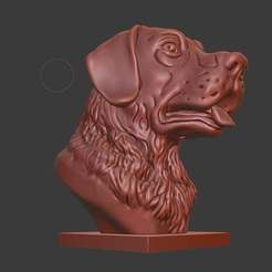 Download free 3D printer files Labrador Retriever bust (Dog head), Boris3dStudio
