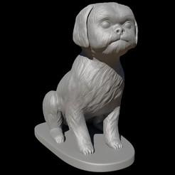 Descargar archivos 3D Shih Tzu sentado, FuturArt-3D