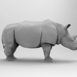 Download 3D print files Rhinoceros , sjsscott1029