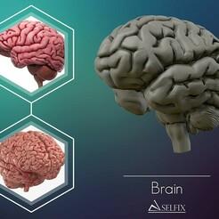 01.jpg Download OBJ file human Brain 3D model Ready to 3D print 3D print model • 3D printer design, selfix