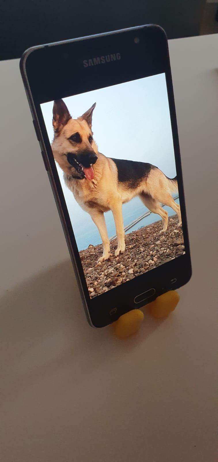 oso soporte 3.jpeg Télécharger fichier STL gratuit Petit gros ours (support pour smartphone) • Objet à imprimer en 3D, MaJoReRo