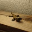 Download STL file GEKO Lizard Iguana Tuque • 3D printable template, alfr3design