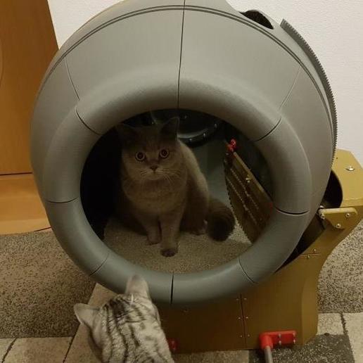 Descargar modelos 3D gratis Inodoro autolimpiante para gatos / Caja de arena para gatos, Der_Stihl