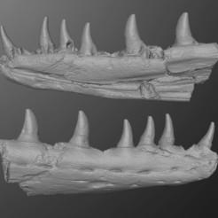 Descargar STL Mosasaur Jaw (Mandíbula Mosasaur), LordTrilobite