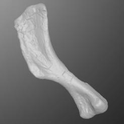 Descargar archivos STL Hadrosaur Humerus, LordTrilobite