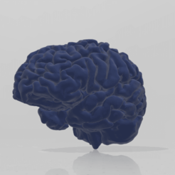 Download free STL human brain, chernyavskayasve