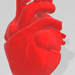 Download free 3D printer designs Heart Anatomical, chernyavskayasve