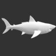 Download free STL file Megalodon • 3D printable object, detaildesigner