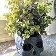 Download free 3D printing designs skull plantpot, Evee