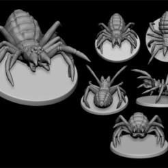 Download 3D printer templates solifuges, ludw2212