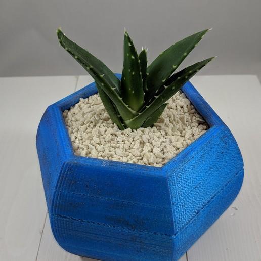 Download free 3D printer files Hexagon Succulent Planter, MikeFiveTango