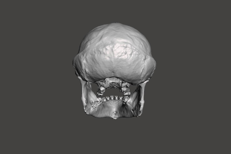 3.png Télécharger fichier STL gratuit Crâne de chimpanzé - Pan troglodytes verus • Objet pour imprimante 3D, Valchanov