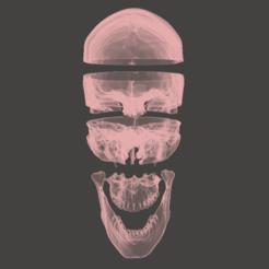 1.png Télécharger fichier STL HD Crâne Anatomique 5 parties • Plan imprimable en 3D, Valchanov