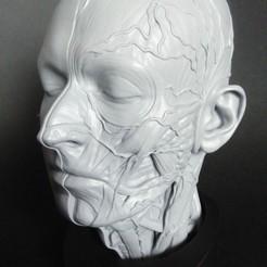 01.jpg Télécharger fichier STL Ecorché anatomique • Design pour impression 3D, CGPRINTER