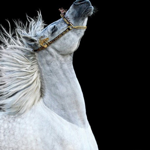 HerMajesty_Photo.jpg Download free STL file Her Majesty - Arabian Horse • 3D printing template, Double_Alfa_3D