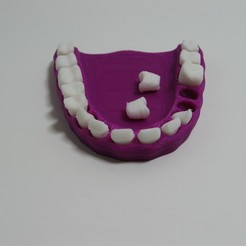 Download 3D printer designs teeth model, reflexpnt