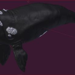 Impresiones 3D Whale, estebanb