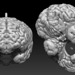 Bird_Brain_Birdhouse_MarcoValenzuela.jpg Download STL file Bird Brain Bird House  • 3D printer design, marco3dart