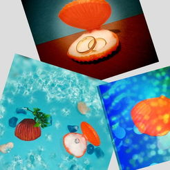 1588022782760.jpg Download STL file Opening Seashell Collection • 3D printing object, sokinkeso