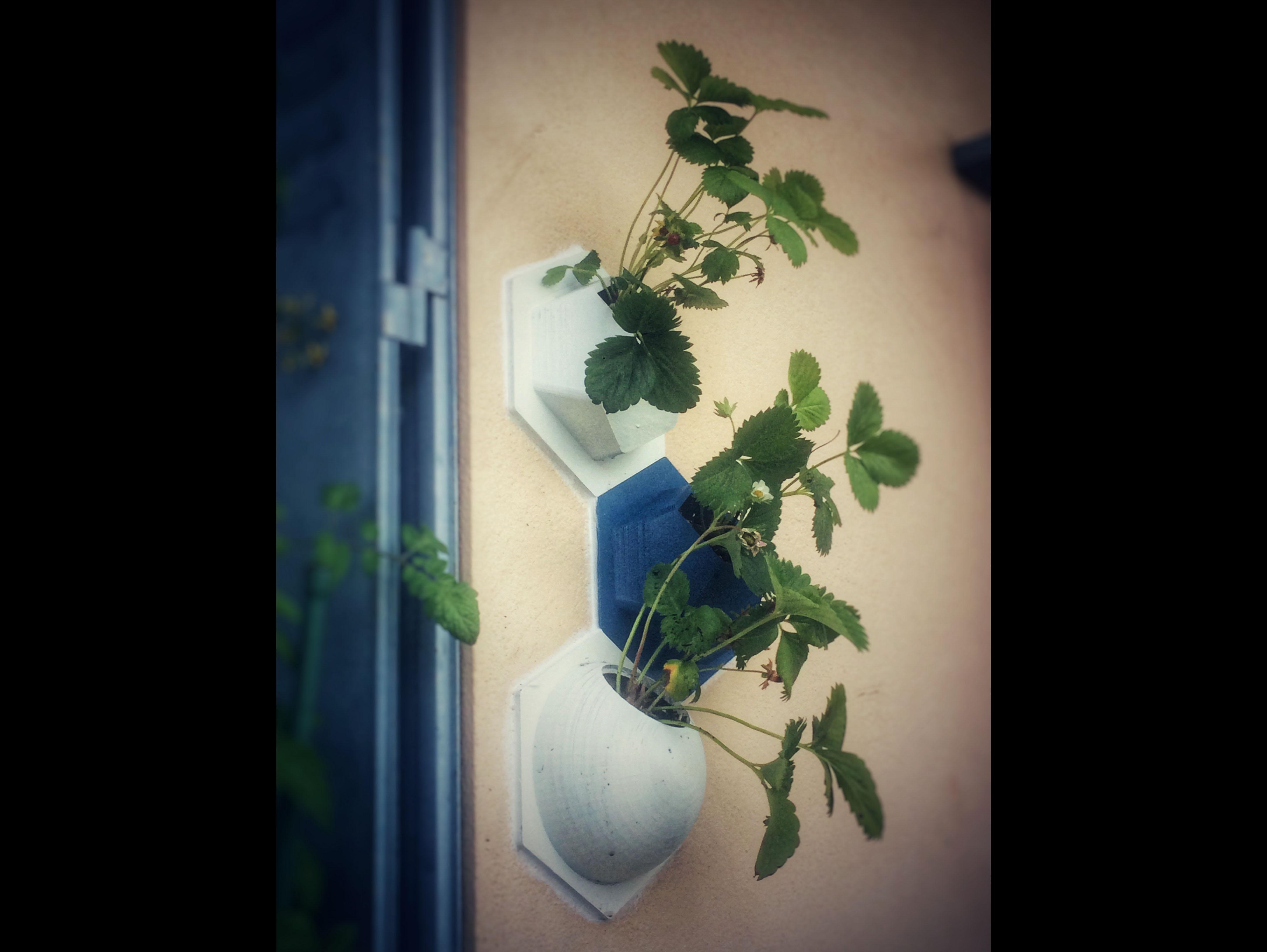 WALL_PLANT_04.JPG Download free STL file Wall Plantations • 3D printing object, JosephKerr