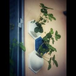 Descargar modelo 3D gratis Plantaciones de pared, JosephKerr
