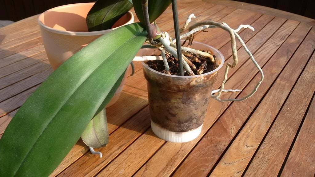 IMG_20180603_190623.jpg Télécharger fichier SCAD gratuit un dispositif de réglage paramétrique de la hauteur personnalisable pour les planteurs d'orchidées • Design pour imprimante 3D, pgraaff