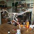 Download 3D printer templates Life-size Velociraptor Skeleton Part05/05, christophvoigt