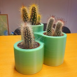 Download free STL file Cactus Pot x3, bifrost76