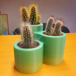 Impresiones 3D gratis Maceta para cactus x3, bifrost76