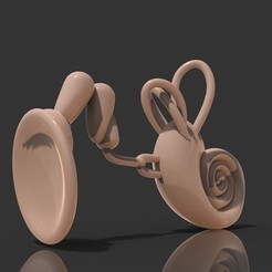 untitled.216.jpg Download free STL file The Educative Eardrum • 3D print object, TresaRyGoul