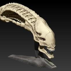 Download STL file Xenomorph skull with base • 3D printer design, SKULLHILL