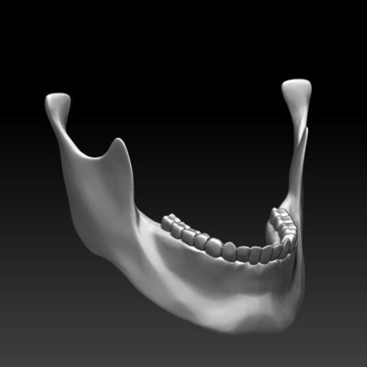 Download free STL file STANDARD JAW (JUST JAW) FOR SKULLHILL'S SKULLS • 3D printing design, SKULLHILL