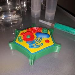 Télécharger fichier 3D gratuit Mini-cellule végétale multicolore, bokormarco