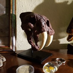 Télécharger objet 3D gratuit Crâne de chat à dents de sabre, bokormarco
