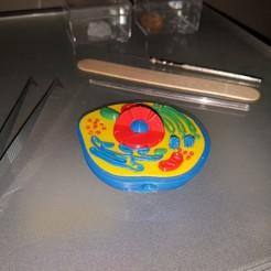 Download free STL files Multi-Color Mini Cell Model, bokormarco