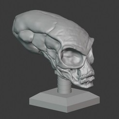 Download 3D printer designs Crystal Skull , PatimStudio