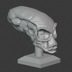 01.jpg Download STL file Crystal Skull  • 3D print design, PatimStudio