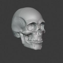 Download 3D printer files Human Skull 2.0, PatimStudio