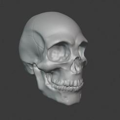 Download STL file Skull, PatimStudio