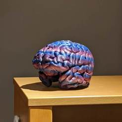 Descargar STL gratis Cómo imprimir en 3D tu cerebro, maxsiebenschlaefer13