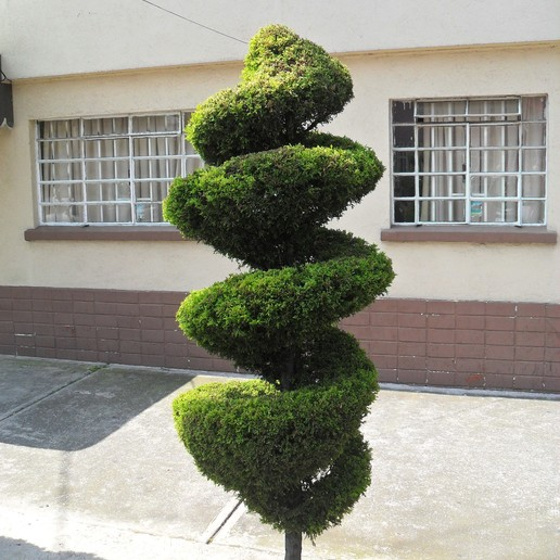 Download free 3D printer files Tree in Mexico, JuanG3D