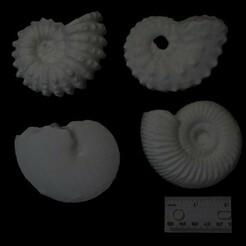 ammonites-500.jpg Télécharger fichier STL Ammonites • Objet pour imprimante 3D, eman1030b