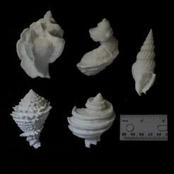 gastropods 500.jpg Télécharger fichier STL Gastropodes fossiles • Modèle à imprimer en 3D, eman1030b