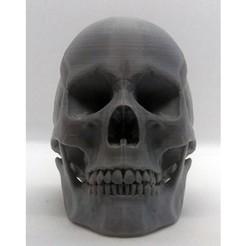 hm_skull_front_5.jpg Télécharger fichier STL gratuit crâne humain • Objet à imprimer en 3D, jolafrite342