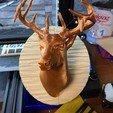 Download free 3D printer model Deer Head, GeorgesNikkei